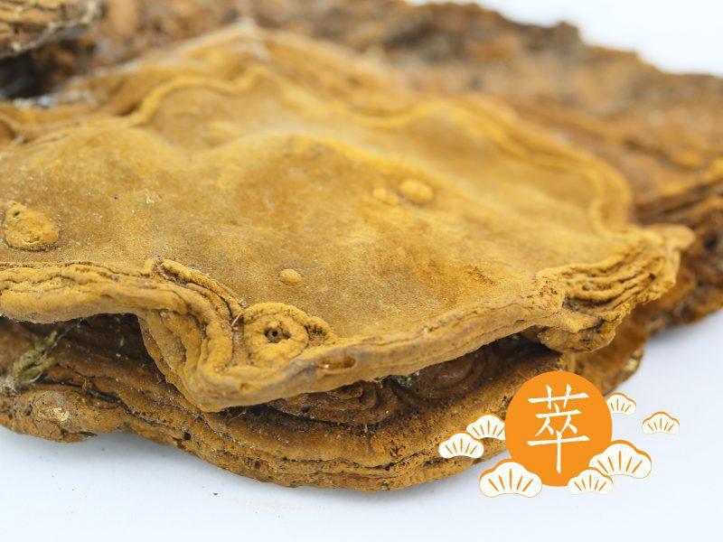 知識小百科:食藥用菇菌
